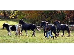 Running-w-Herd