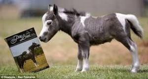 Horse Reading